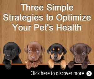 Three Simple Strategies to Optimize Your Pet's Health
