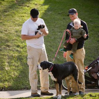 Postura Corporal Canina