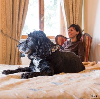 dog inside hotel
