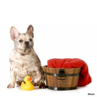 6 Formas En Las Que El Bicarbonato De Sodio Ayuda A Tu Perro