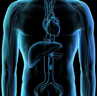 心臓、肝臓の健康