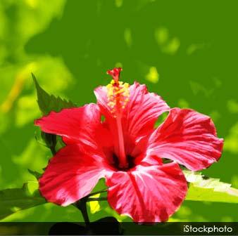 El Poder De Las Flores 42 Flores Que Se Pueden Comer