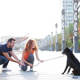 Interactuar con Perros