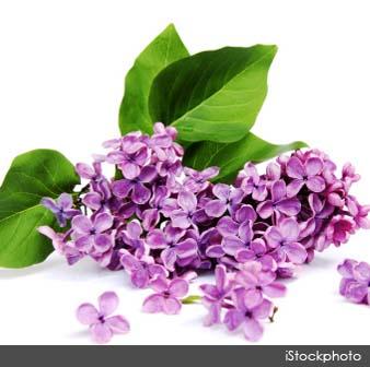 42 άνθη για .... φάγωμα