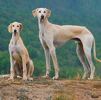 Perros Nobles