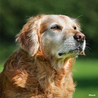 Dignidad Canina
