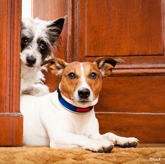 Razones por las que los perros viejos son los mejores - Escaleras para perros pequenos ...