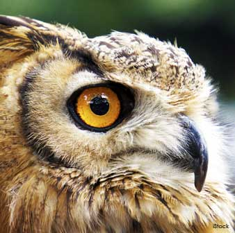 Owl's Large Eyes
