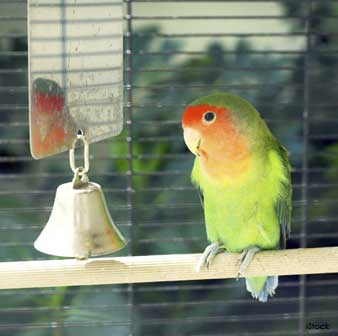 Lead Poisoning in Pet Birds