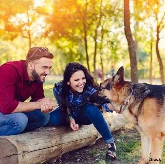 Saludar Perros